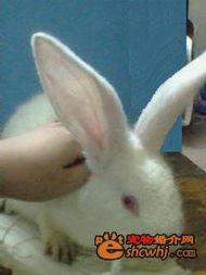 熙子的:大宝:-樱花飘落 樱殇宫 ―樱殇― 开店 买兔子咯