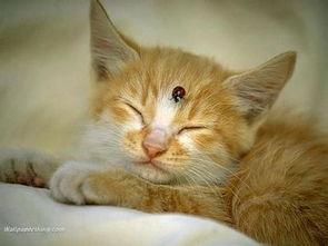 怎么预防猫身上产生寄生虫