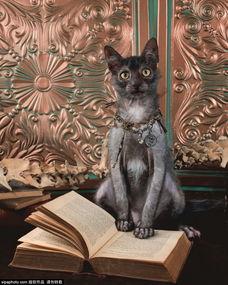 姐妹俩跟狗做爱-...一只黑色短毛猫交配,培育出一种新品种的猫.这种猫的眼睛、鼻子...