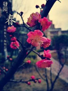 梅将尽春回大地,万物复苏,傲寒霜的梅花悄悄隐去,再发