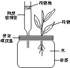 m监狱嫌犯档案的头像-...有关科学探究的资料,回答问题.M植物根吸收的水分,以水蒸汽状态...