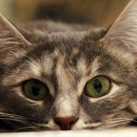 萌猫头像兔玩在线 微信头像图片大全