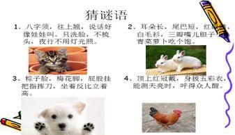 我喜欢的小动物PPT课件下载