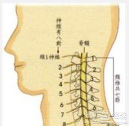 脊髓型颈椎病的阳性体征