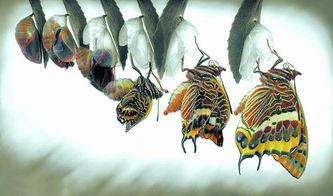 暗焚-原标题:蝴蝶的涅槃 西班牙卡隆赫52岁的男艺术家吉米·霍夫曼在自...