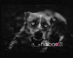 不要让动物视人类为敌人-Photo 杂志法国版摄影作品赏 社会与自然的...