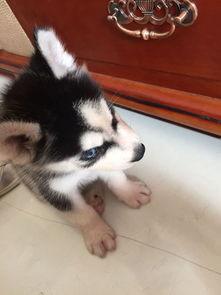 怎么给狗狗取名字 小狗取什么名字好听