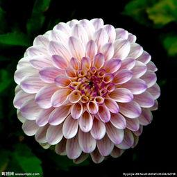 绽放的花朵图片