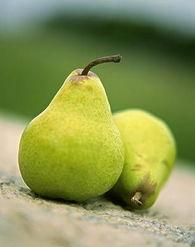 大雪梨1个,以丁香15粒刺入梨内,湿纸包四五重,煨熟食之.
