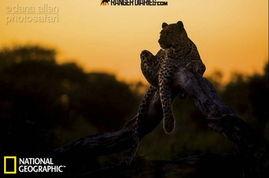 ...远不会忘记这一瞬间,在黎明时分的卡拉哈里平原,亲眼目睹狮子在...