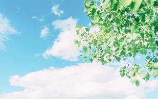 绿色小清新风景高清图片桌面壁纸