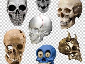 骷髅头白骨骷髅白色头骨骷髅PNG免扣素材图片下载png素材 效果素材