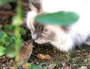动态-英上演真实版 猫和老鼠 小老鼠与猫对视