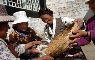 西藏农村妇女党员成为致富引路人 2