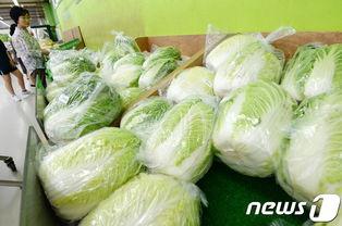韩国一棵白菜四十多,两斤菠菜卖八十