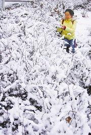 后来的雪-昨天,市民被雪后的靓丽景色吸引,纷纷来个亲密接触.YMG    摄