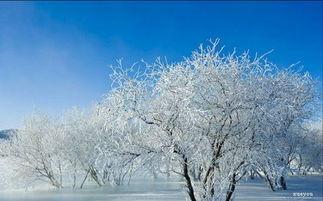 雪的谚语10个-八、雪碗冰瓯:形容碗盆器皿洁白干净.也比喻诗文清雅.   九、白雪...
