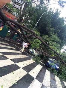 苏那罗的圣塔-超强台风苏迪罗登陆