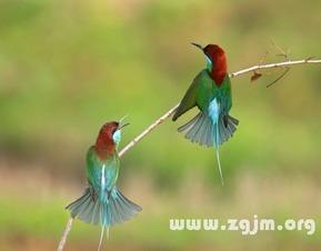 梦见两只漂亮的鸟