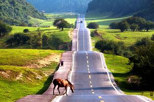 人与自然陈勇 摄-到观音桥看 最美乡村公路