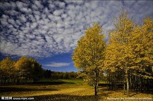 叶落苍穹-蓝天落叶图片