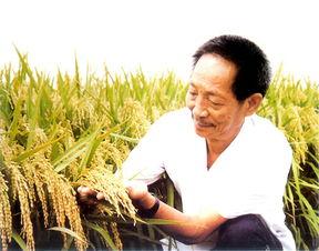 ...梦里水稻长得像高粱那么高