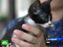 秘鲁巨人蜈蚣9cm价格-美国猫咪长7厘米有望夺世界最小猫称号