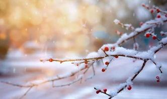 16个冬天的成语,原来都出自诗词 故事时报 雪晴故事网