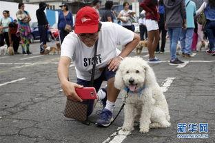 有女人和狗操逼的视频吗-...月23日,一名女子在比赛现场用手机和宠物犬合影.当日,在秘鲁首...