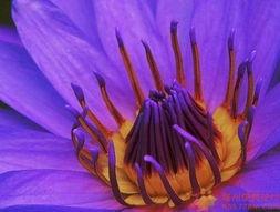 花荫露-花朵珠露之美
