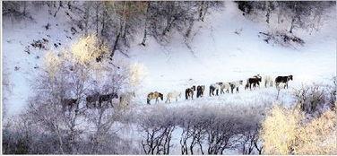 姚瑶   同一片天空的雪,落在不同的土地上,气质千差万别.江南的雪...
