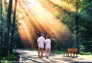 父母背影图片唯美夕阳-平面设计素材图片专题,平面设计素材下载