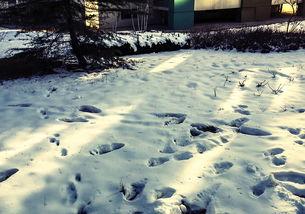 天空飘着一片雪】天空飘着六月的雪-三、   大雪天外出,要选择鲜艳的衣服.   下雪会影响司机的视线,看...