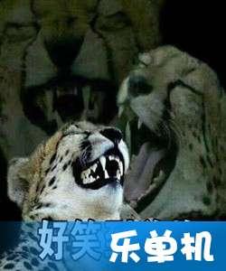 非常豹笑表情包大全 豹笑表情包无水印资源