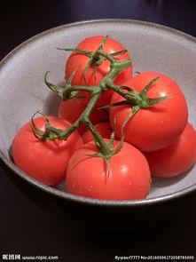 红蕃茄hk16-红番茄图片