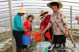 ...年之计在于春,留守妇女们喜笑颜开地劳动着.-祁东县 家门口的 蔬...