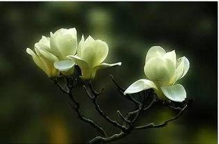 一年四季都开什么花 快来看看吧,春夏秋天每天都开花