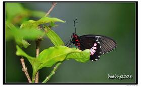 怎样折纸蝴蝶?