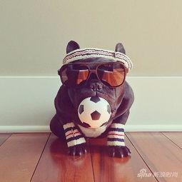 """狗攻人受漫画-ter这只小黑狗狗有自己的Instagram账号,有时尚摄影师""""妈妈""""的帮..."""