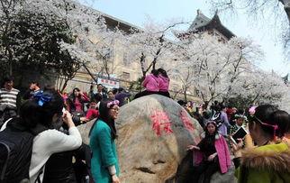 武大樱花节数万游客挤爆校园 樱花美景令人醉