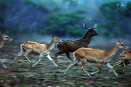 ,成为生态海南人与自然和谐相处... 亲爱的,你慢慢飞.   坡鹿能跑善...
