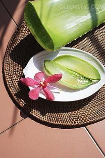 花荫露-芦荟含有一种高分子配糖体,配糖体本身并没有香气,但在被人体分解...
