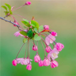 微信最吉利的好看头像花卉图片 吉利富贵微信头像风景图片