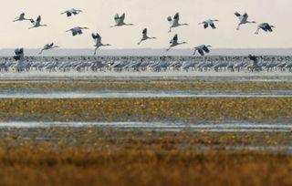 鄱阳湖候鸟-冬季观鸟之旅 给你一个爱上鄱阳湖的理由