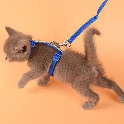 ...咪专用牵引绳拴猫绳溜猫绳子