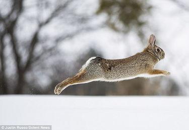 kigurumi神木林兔子-27岁的摄影师贾斯汀•鲁索在加拿大安大略省拍摄到的一组照...