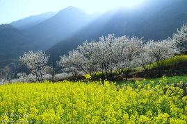 甘孜州 梦境里的初春