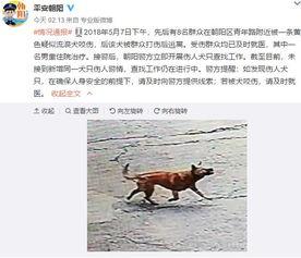 年路附近被一条黄色疑似流浪犬咬伤,后该犬被群众打伤后逃离.受伤...