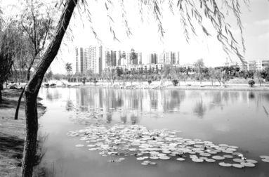 情系沙澧河 再造新家园