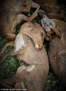 kigurumi神木林兔子-绵阳市森林公安局确认,何某家中共有毛冠鹿等7类物种,均属于国家...